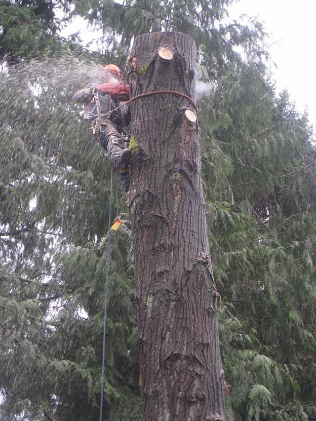 Emergency tree cutting