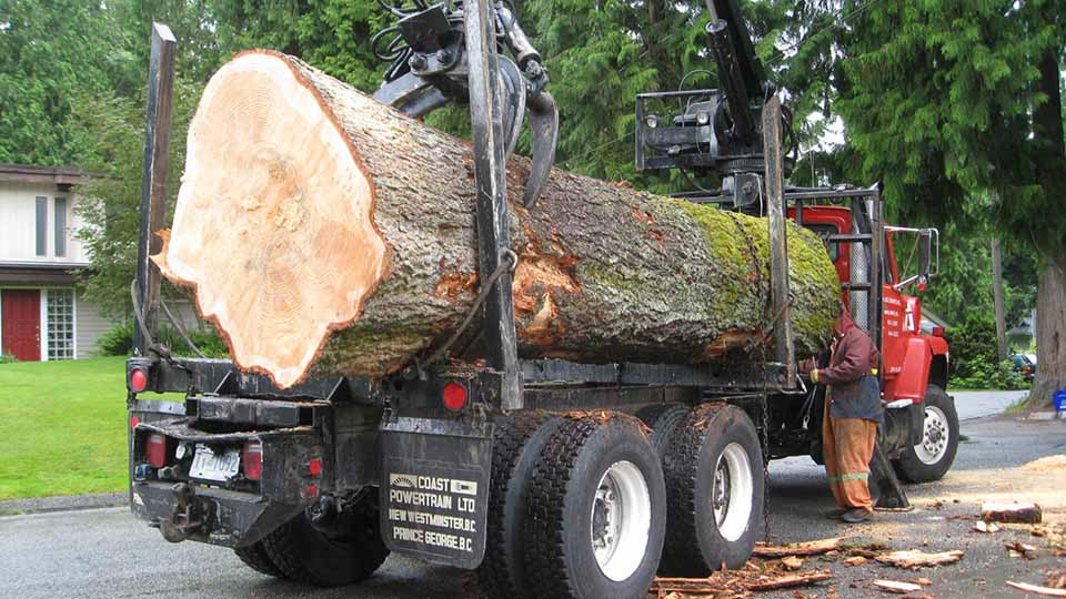 Loading a tree on a truck
